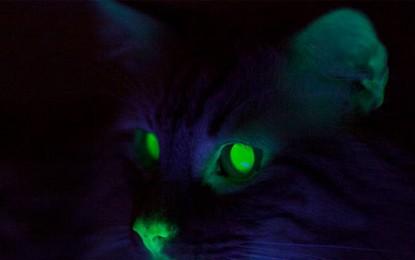 Centro genético de Nova Orleans cria gato que brilha no escuro