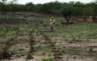 Após chuvas, agricultores já vão iniciar o plantio em Juazeirinho