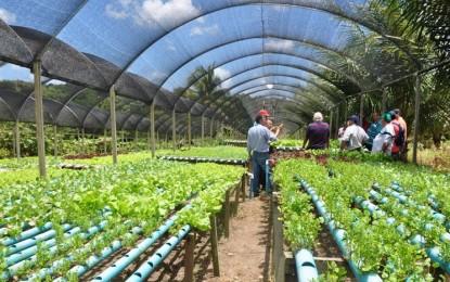 Na seca, agricultores devem economizar água com medidas alternativas