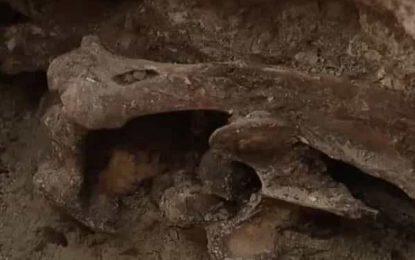 Escavações para piscina revelam esqueleto com 14 mil anos