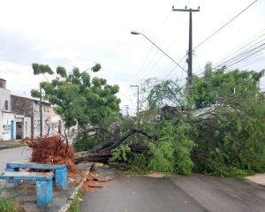 Chuvas em Fortaleza causam queda de árvore, telhado e poste; carro cai em canal de Caucaia
