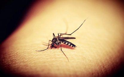 Boletim epidemiológico revela aumento significativo nos casos da dengue, chikungunya e zika na Paraíba